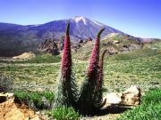 teide nationalpark bild 1.jpg